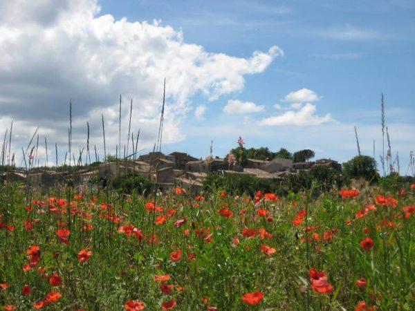 provenza e camargue paessaggio
