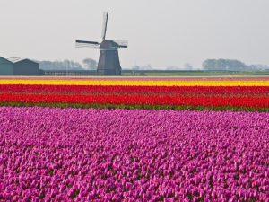 Tulipan tour bici e barca bici e vacanze