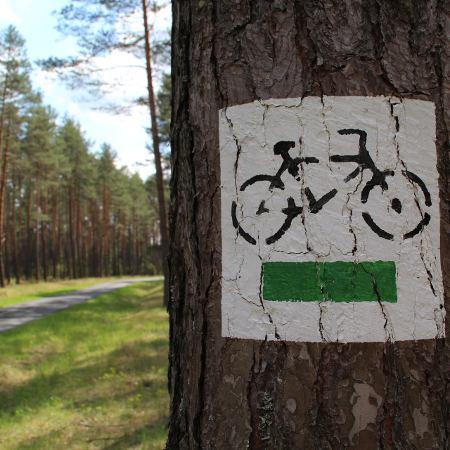 albero bicicletta bici e vacanze