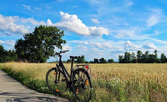 bici estate campo grano alberi bici e vacanze