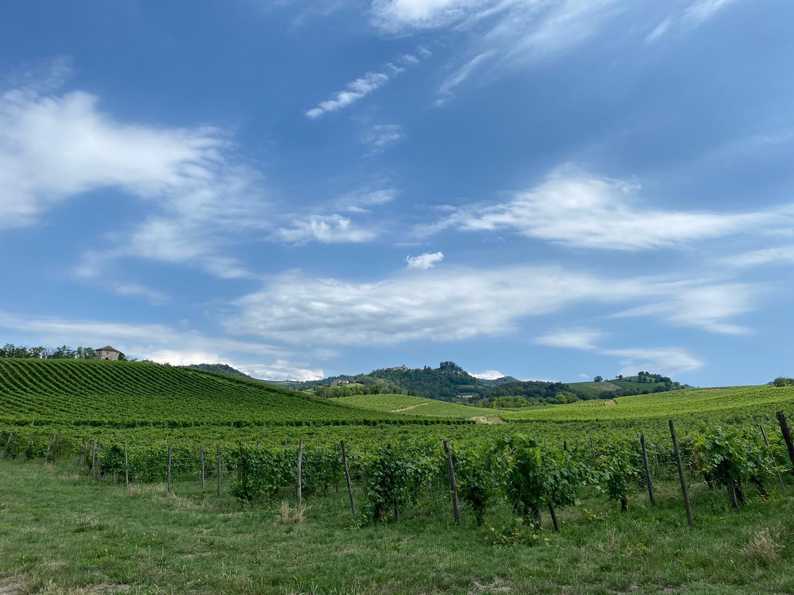 Wineyards; Oltrepò Pavese; bike