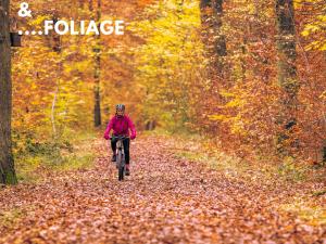 bosco in autunno bici