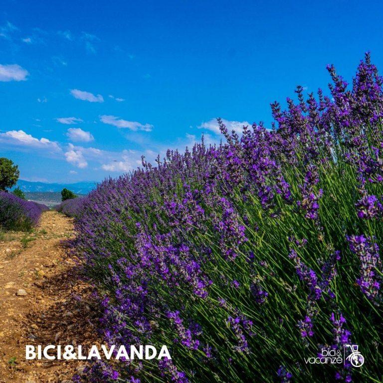 Vacanze in bici Tour e viaggi in bici e e-bike in oltrepò pavese; bici e vacanze